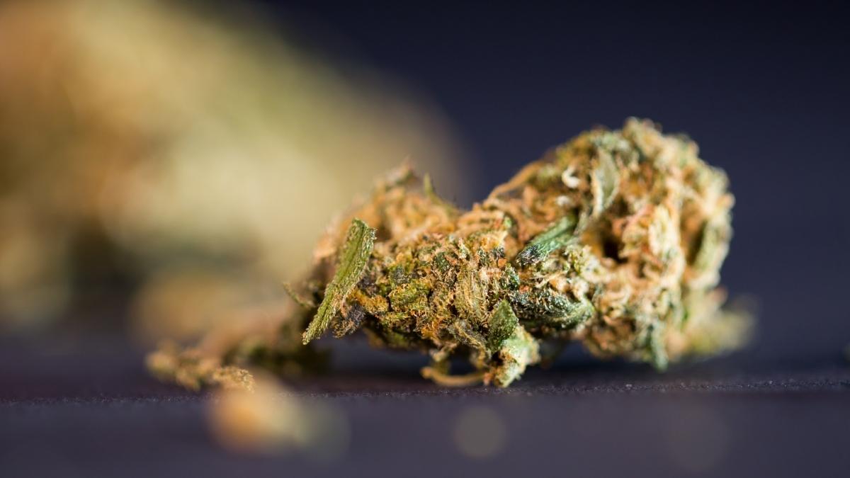 up-close in-focus macro shot of cannabis nug