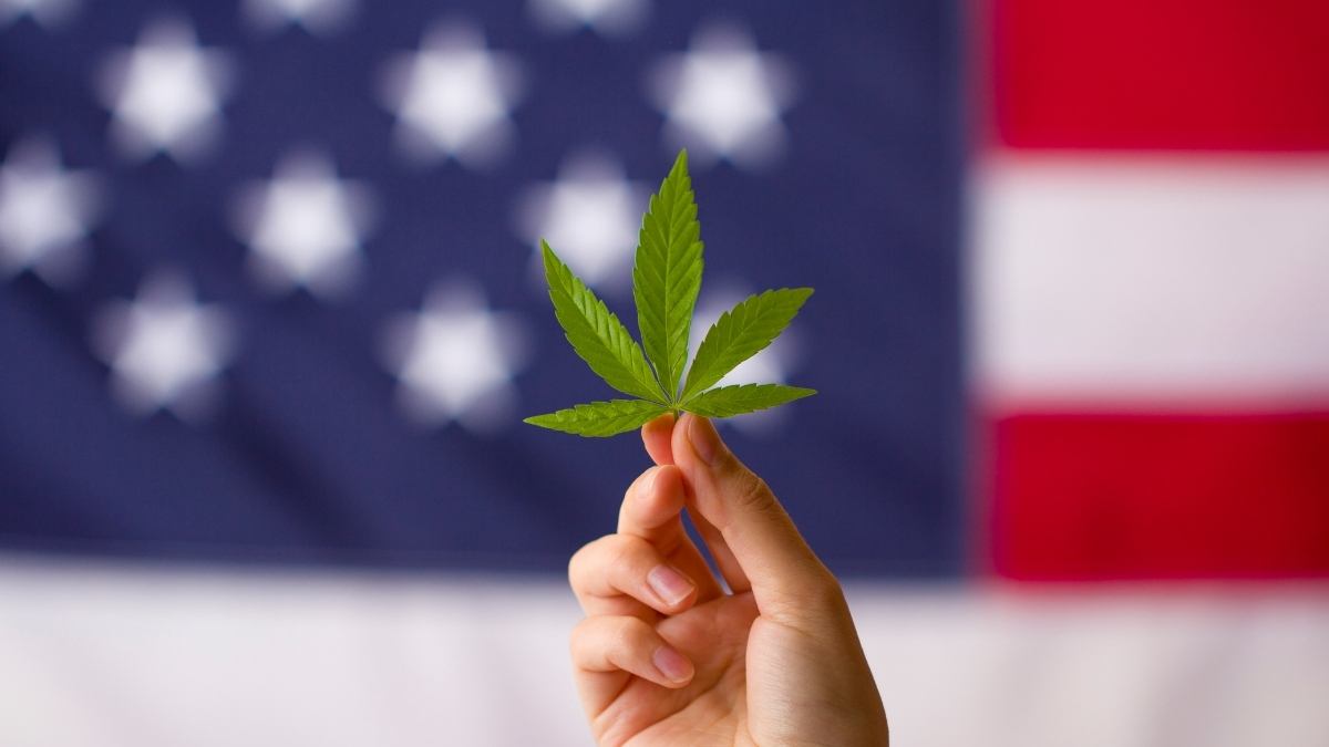 blurry american flag background with a hand holding a cannabis leaf